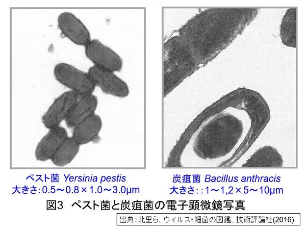 菌 ペスト ペストの治療方法と感染対策